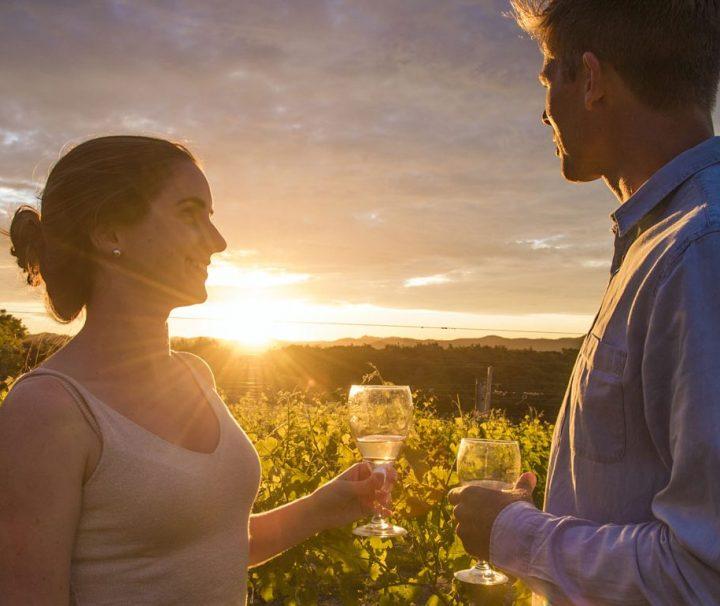 Bay Of Island wine tours
