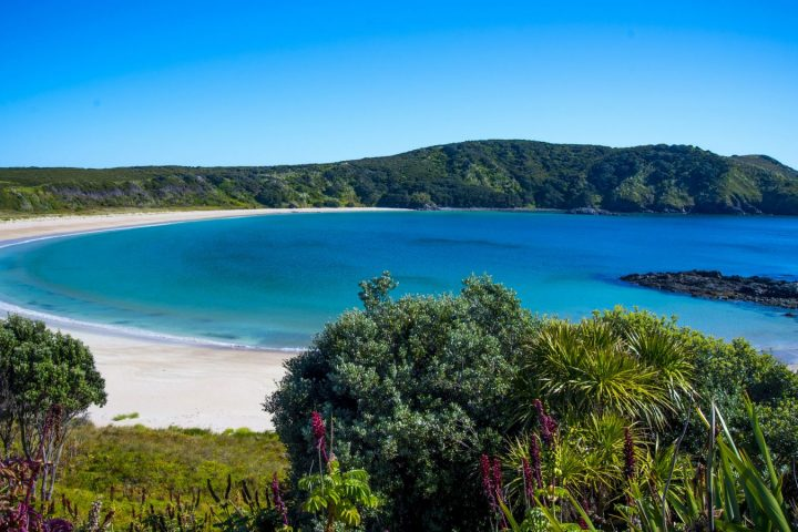 Bay Of Islands Tours